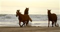 Wild Horses of Outer Banks