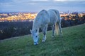White Horse Steyregg