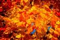 Fall (1 of 1)