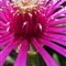 Flower (sat +10, lum +10, con +5, ritaglio) (100) IMG_3884