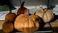 Imposter Pumpkin