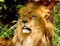 RIP KING LIONEL....