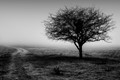 Lonesome tree