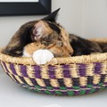 Snickers in a Basket