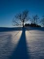 WinterSun_IMG07399