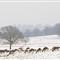 2013 snow WPO 003