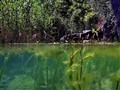 My Lake Garden