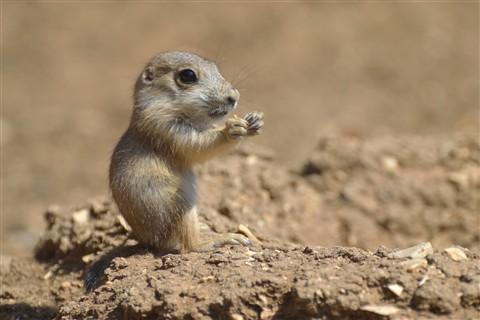 cute-animal