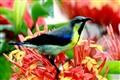 Sunbird-Moutushi-1