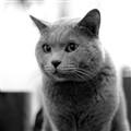 Mun Sai - My pet