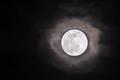 Moon's Light
