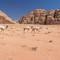 138_IMGP7866_Wadi-Rum