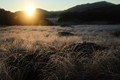 Sun over the frosted grass
