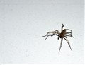 spider on the bedside table and a little dust
