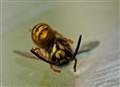 Sleeping Beee-Ty