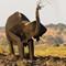 Elephants_9842
