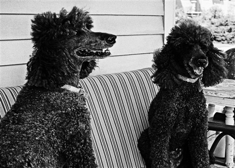 dog-2bnw-1_edited-1