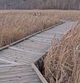 November colours of the marsh