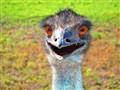 Emu...Ewho?