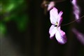 flower IX