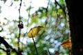 cobweb in autumn sunshine