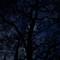 lunar_tree2