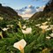 Cala Lilies Valley