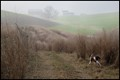 Chase hunting pheasants in the fog
