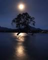 Moon over Wanaka Tree 3