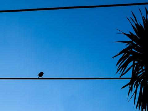 dz_bird
