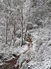 Blackheath, NSW