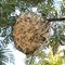 Wasp Hive