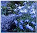 blue flowers for Robin Gibb