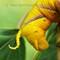 16-09-07 P1870953 Yellow cat2