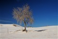 Lone Tree at White Sands-NM, USA