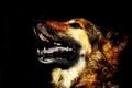 Naughty Dog!!!!!!!!