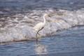 running egret (1 of 1)