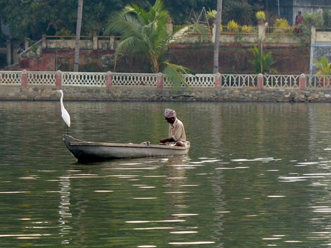 bird on backwaters