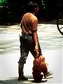 Orangutan and keeper