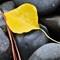 Yellow Leaf on rocks
