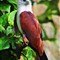 Jurong Bird Park (29)