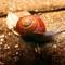 Garden Snail 12-2013