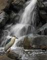 Prehistoric bird photobombed my waterfall shot