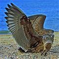 Feathers-MACRO