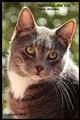 Midday cat's portrait