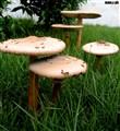 mushroom taken in garden