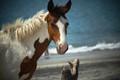 Horse @ the beach