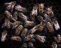 Lotsa Bees