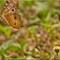 Butterflies_P6172073