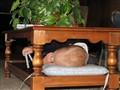 10-03-2008-ESTES-PARK